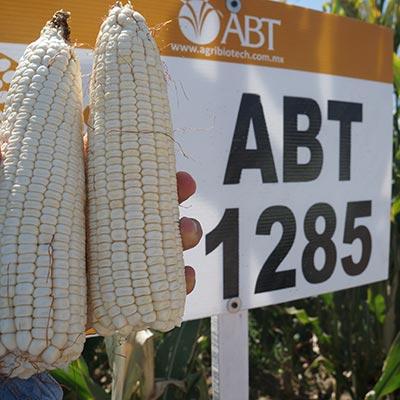 ABT 1285