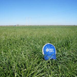 Rye Grass ABT México, cultivo forrajero con excelente potencial de rendimiento y valor alimenticio para la época de invierno